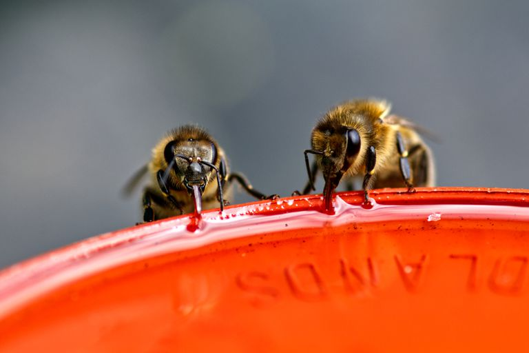 Bees resting on a red surface.
