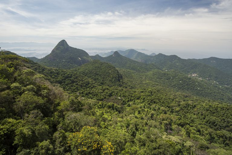 Natural scenery of forest and mountains, Tijuca Forest National Park.