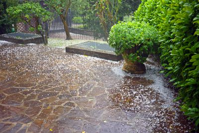 View of a landscaped backyard during a hailstorm.