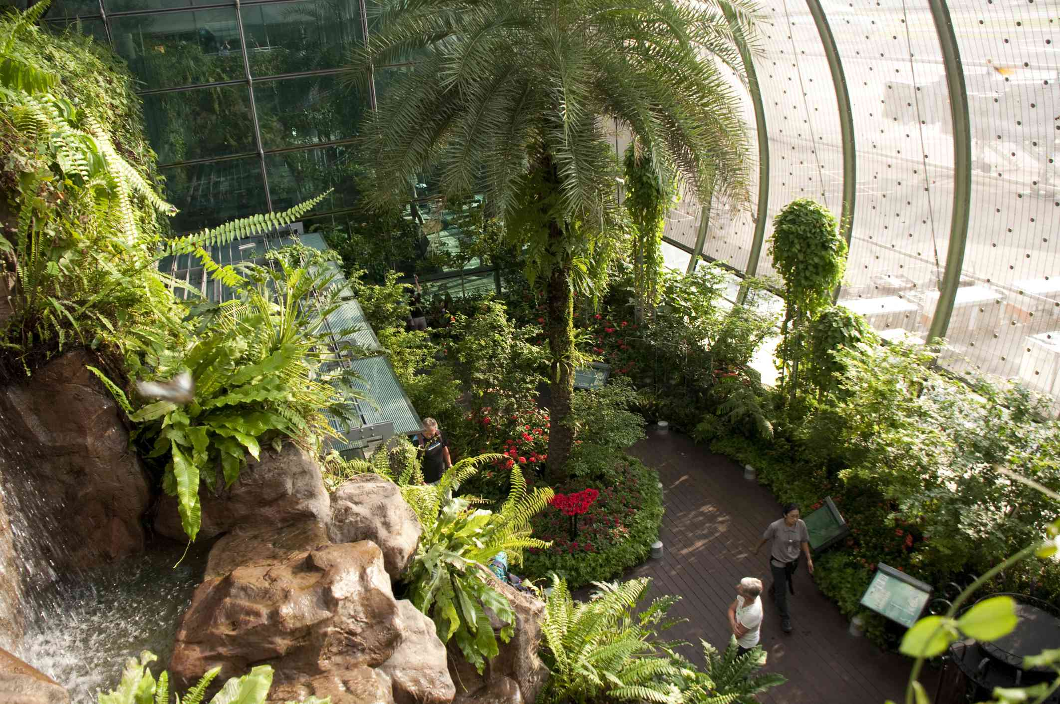 a curved glass window, lush greenery ,and ferns of the Butterfly Garden of Singapore Changi Airport