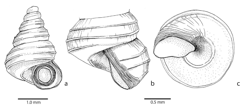 greta snail