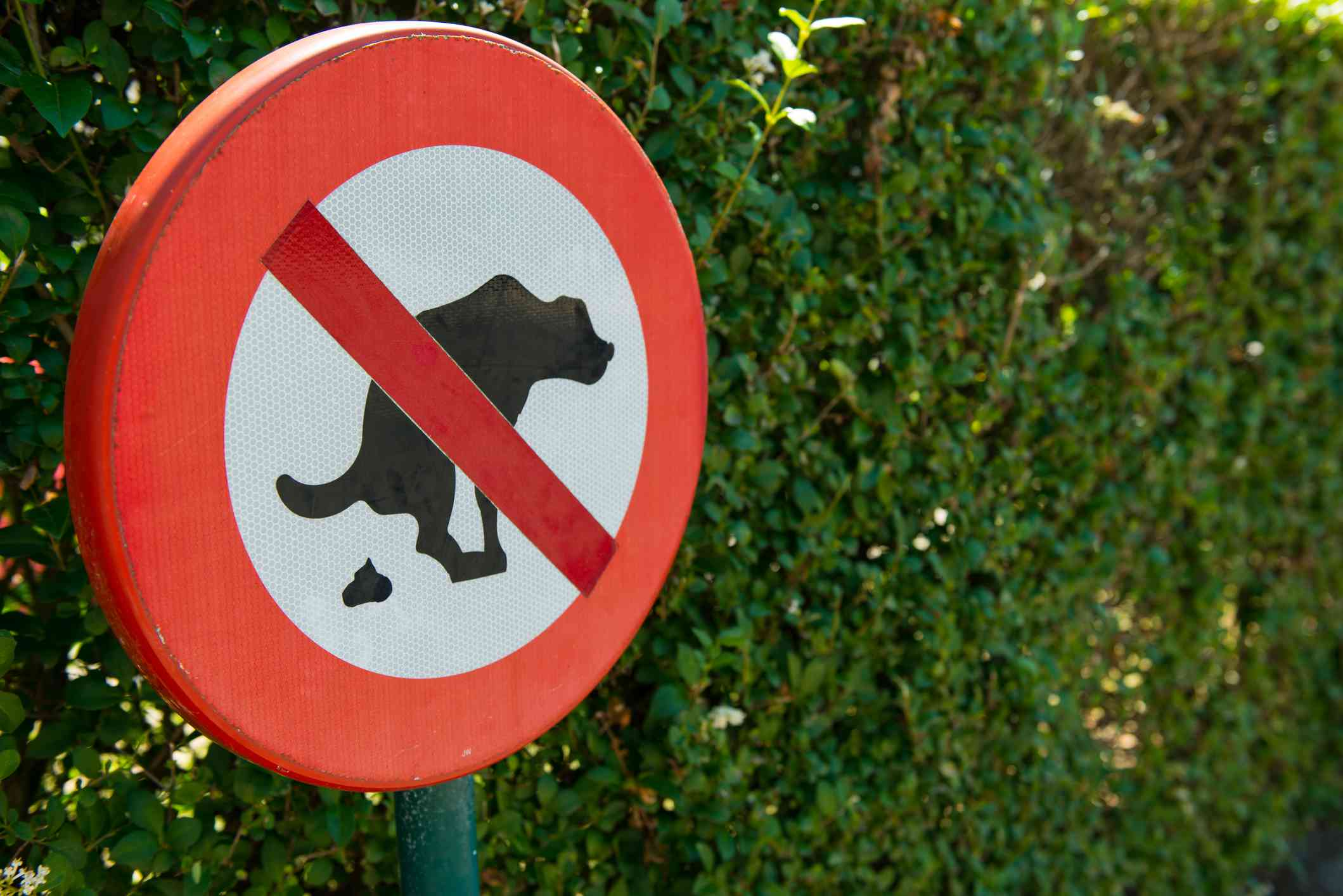 No dog pooping sign in the park