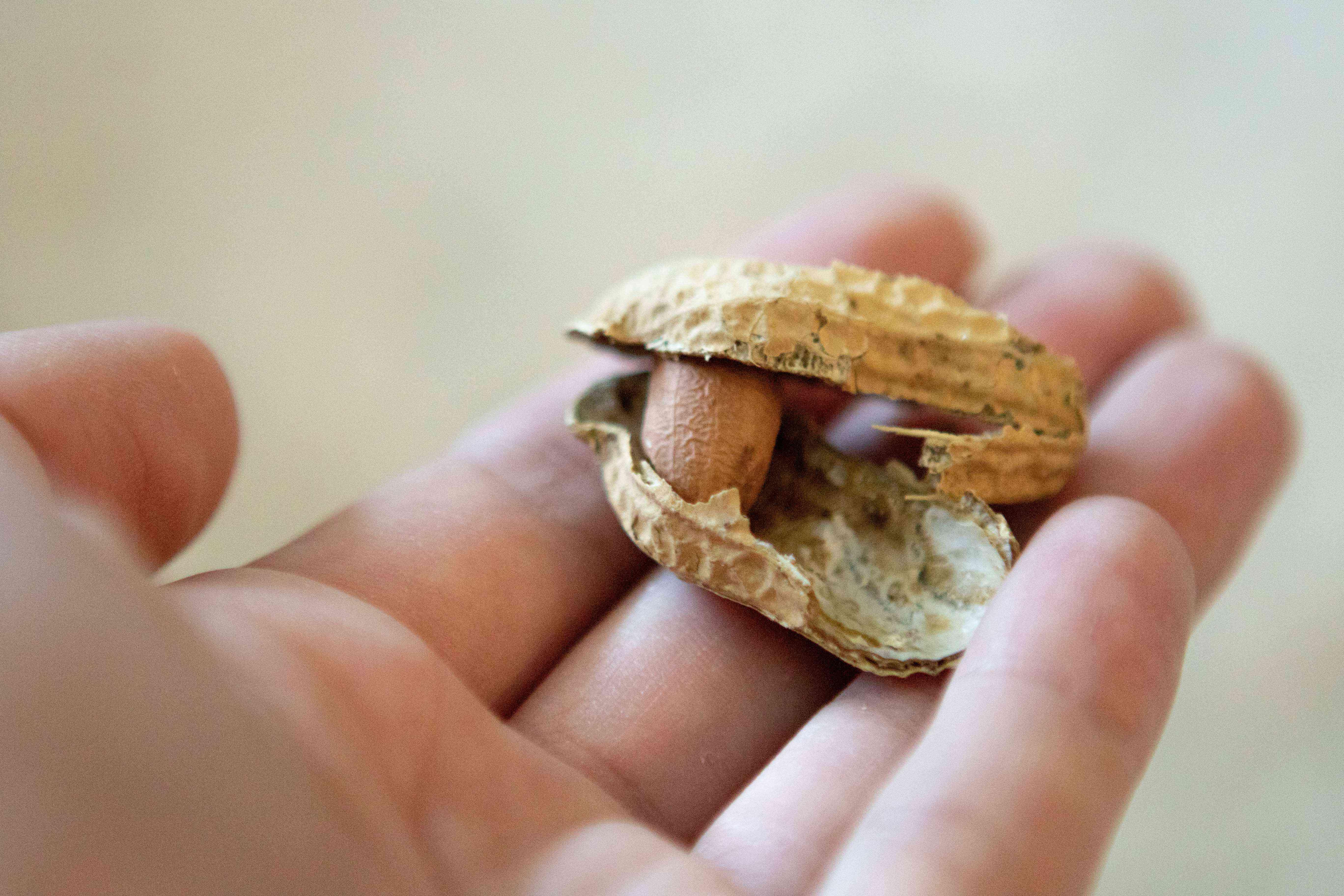 hand holds open peanut still in shell
