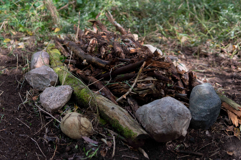 exposed tree limbs of garden bed
