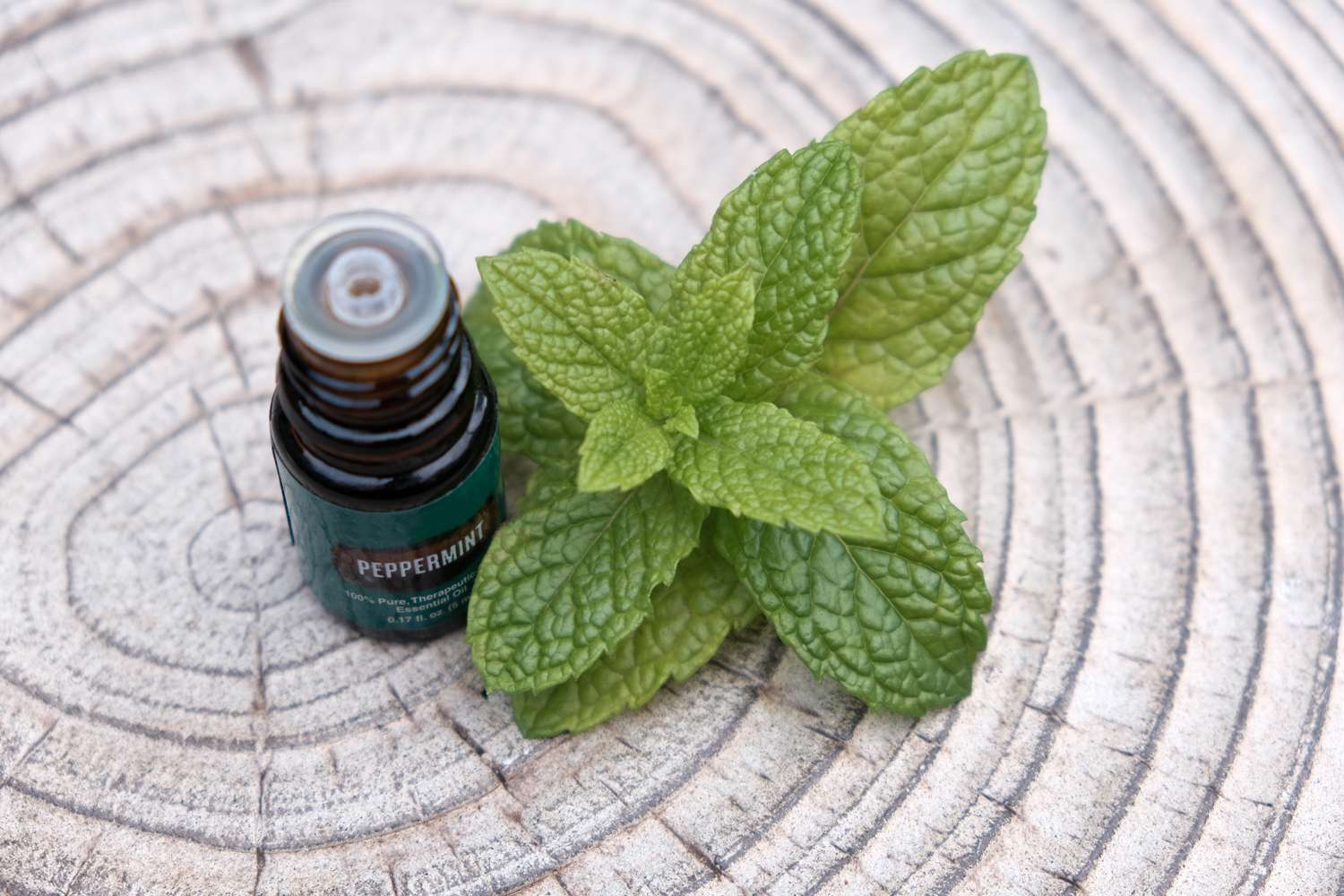 small jar of peppermint essential oil with fresh peppermint sprig on tree trunk