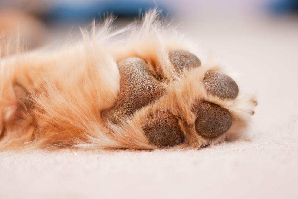 dog's paw pads