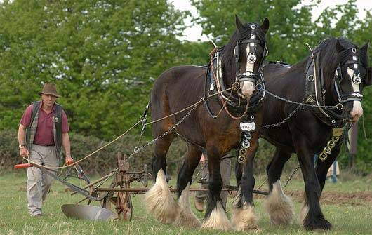 Farmer with heavy Plough and horses