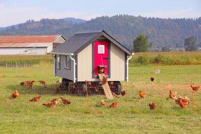 Fancy Chicken Coop