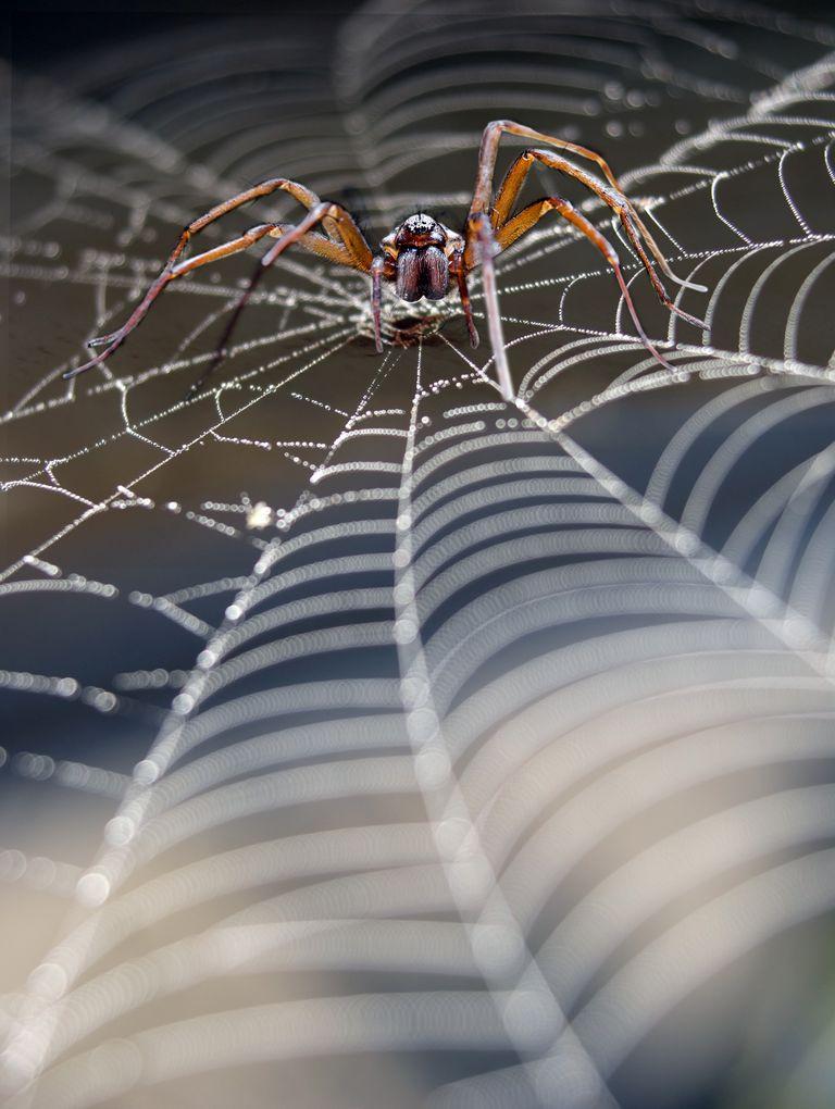 Un nuevo material hecho de seda de araña y árboles podría reemplazar al plástico