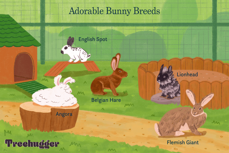 five adorable bunny breeds illustrated