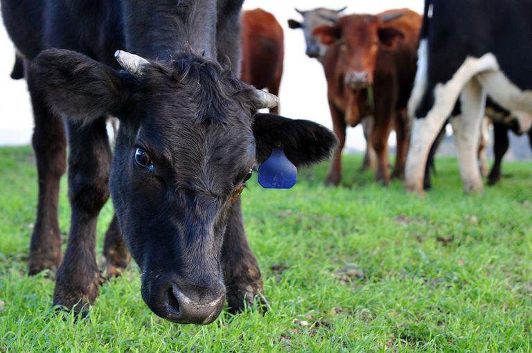 ¿Deberían los agricultores pagar más por los antibióticos?