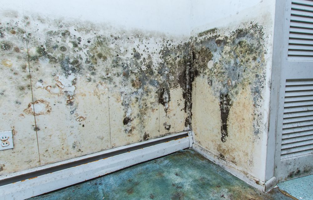 Mold growing on the walls in a water-damaged home
