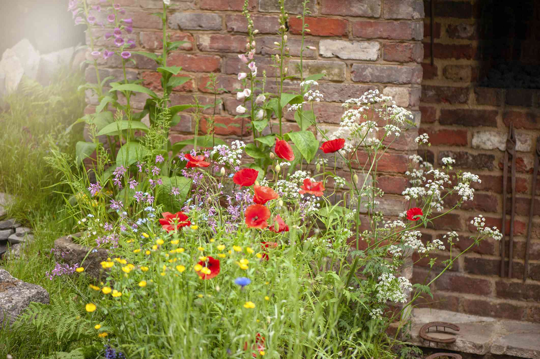 Wildflower garden in front of a brick wall.