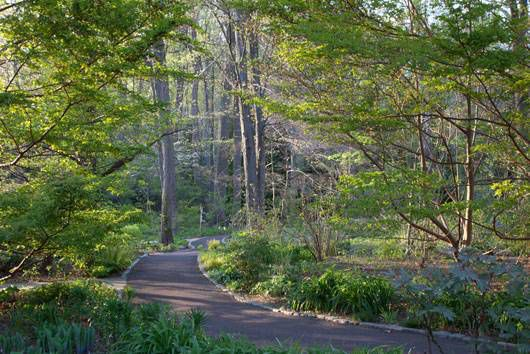 Chanticleer Asian Woodland Garden
