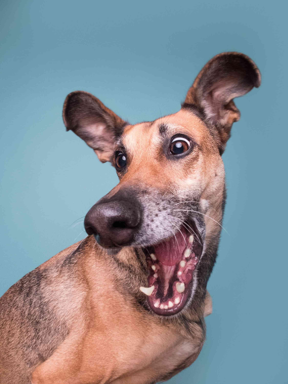 dog making funny face
