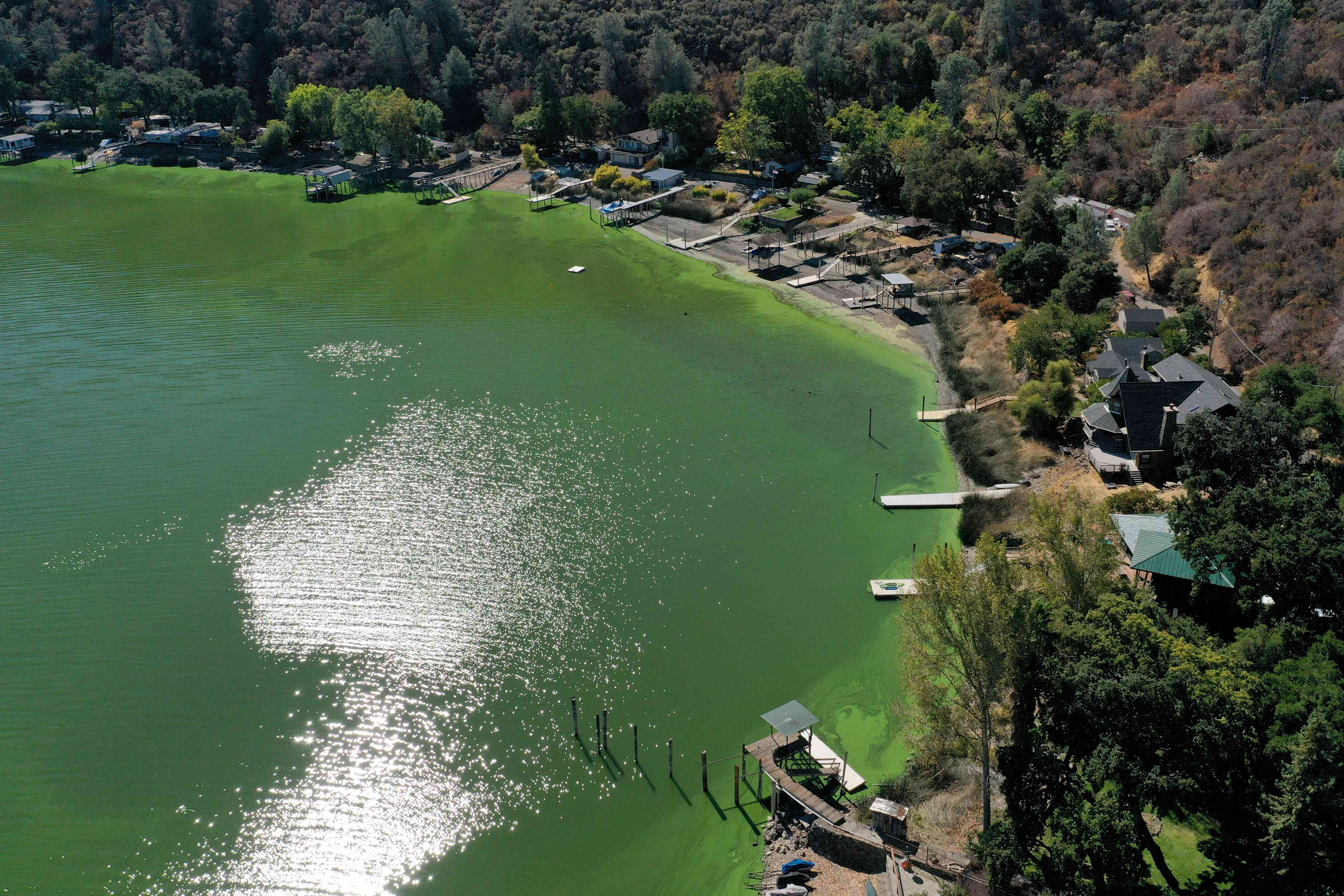 Cyanotoxin Outbreak Due To Dry, Hot Summer Threatens Water Supply In Clear Lake, California