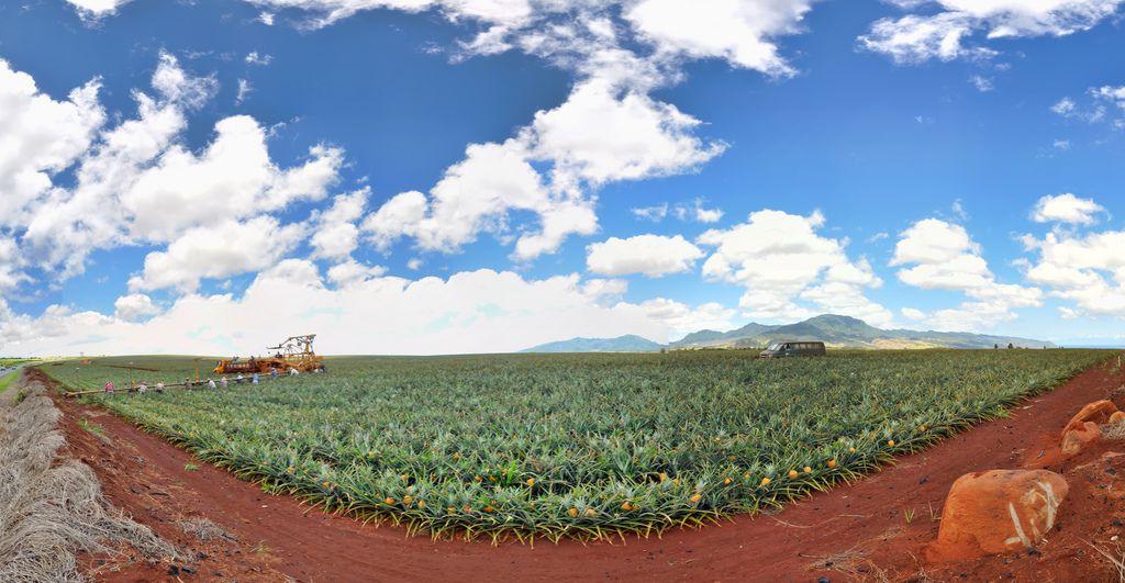 The Dole Plantation on Oahu, Hawaii.