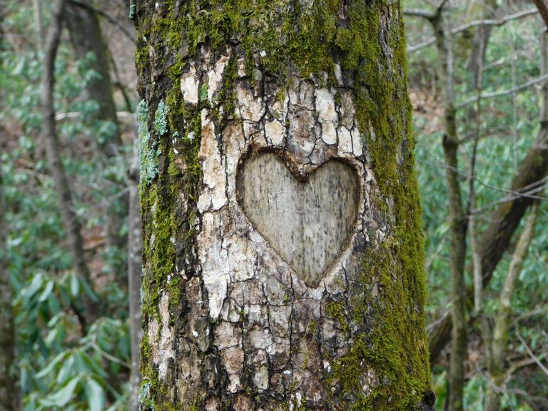 Heart carved into a moss-covered tree trunk
