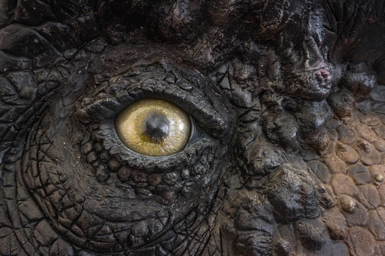 A close-up of a T. rex's eyeball