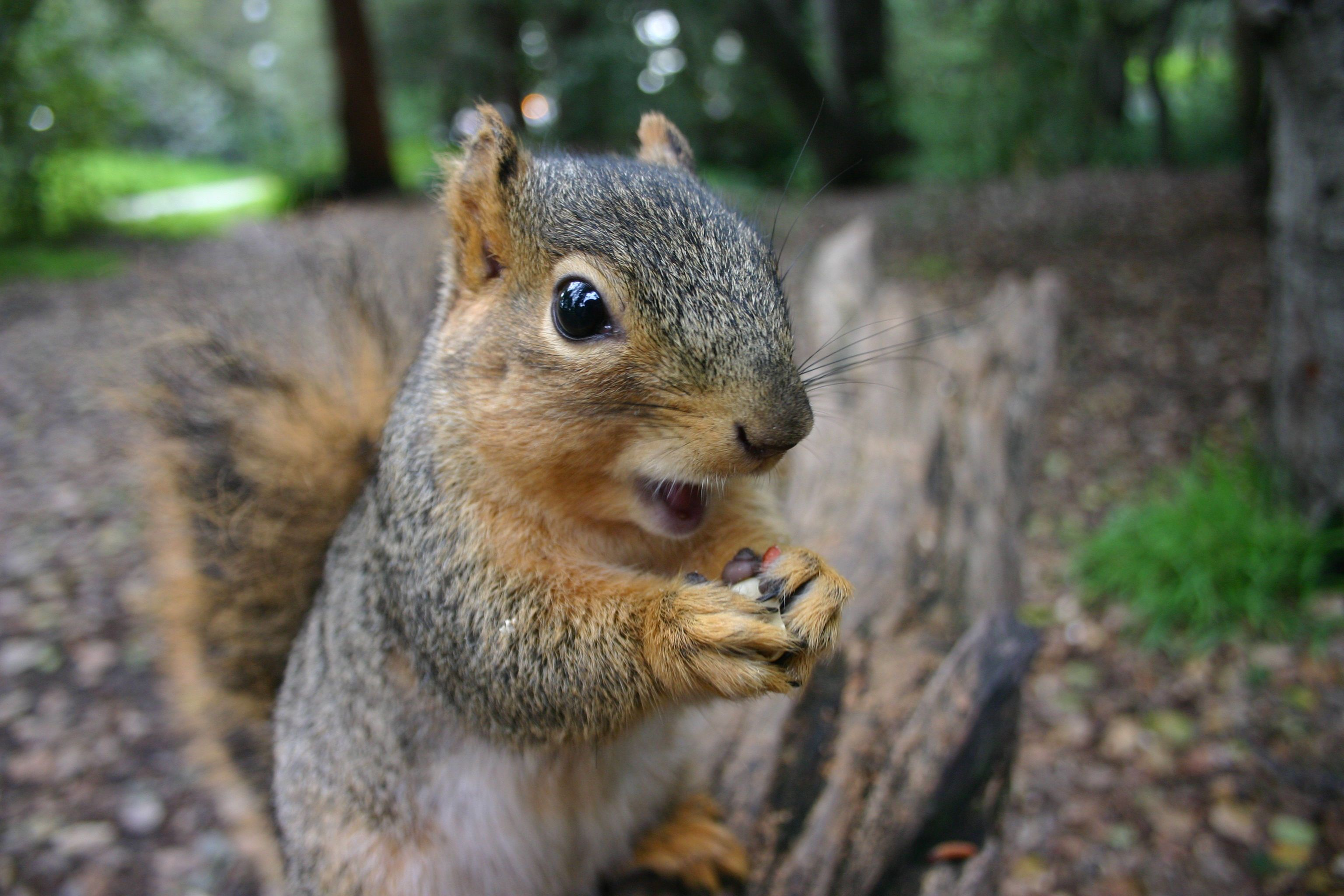 18 Surprising Facts About Squirrels