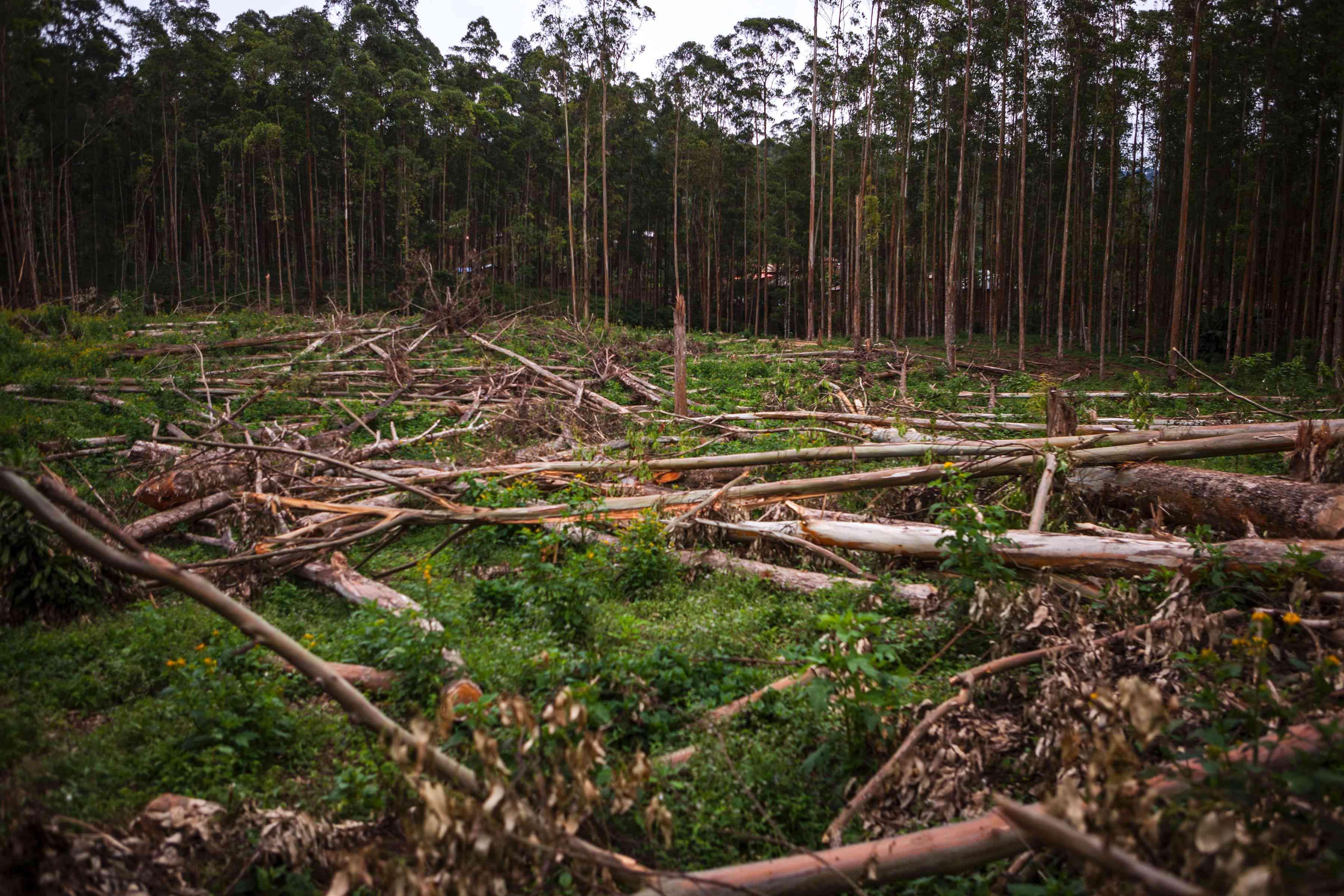 logging in the Democratic Republic of Congo, DRC
