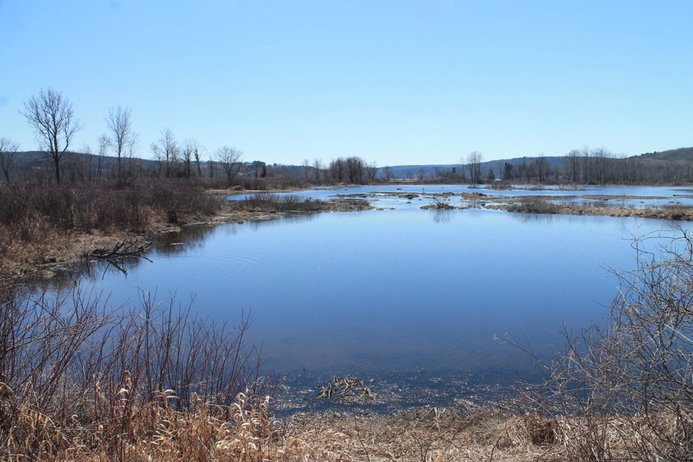 Vernal pools in Triangle, New York.