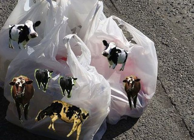 Hidden Animal Fat Lies In Plastic Bags Photo