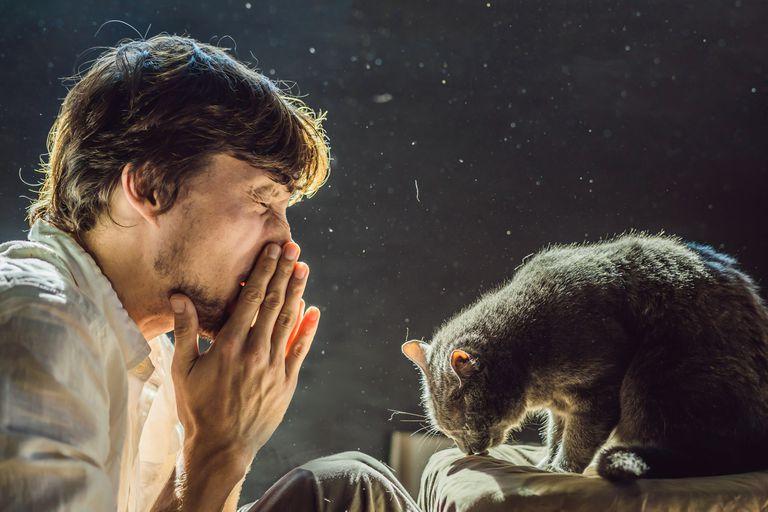 ¿Alérgico a los gatos? Una nueva vacuna podría ayudar