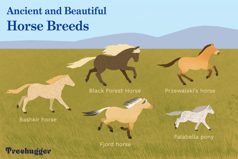 ancient and beautiful horse breeds illustration