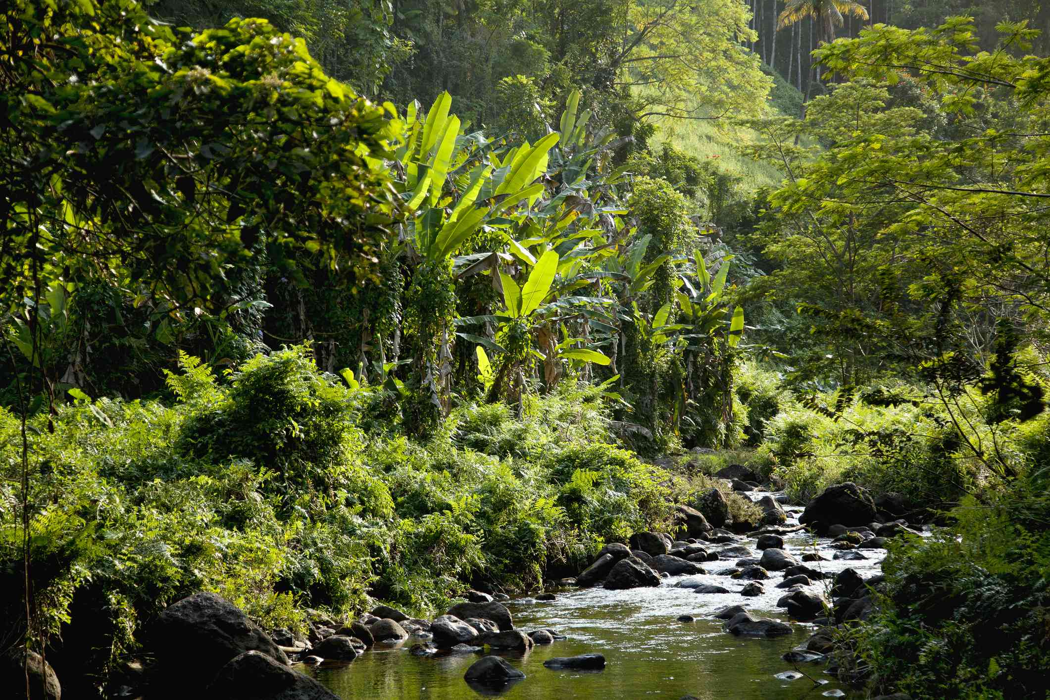 Creek running through the tropical landscape of Hakalau Forest