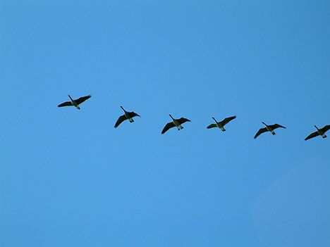 birds flying photo