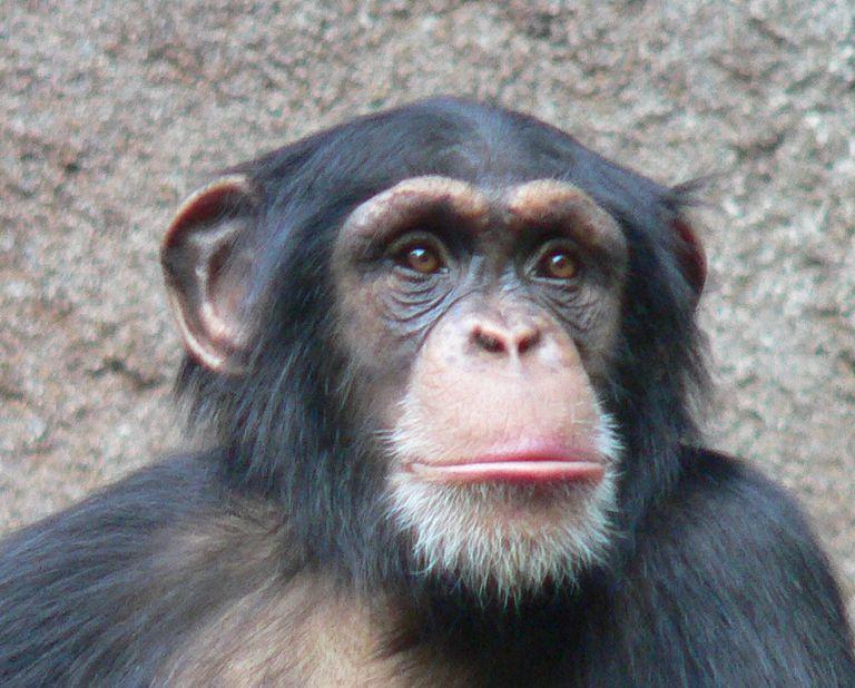 Los animales son más inteligentes de lo que la gente piensa