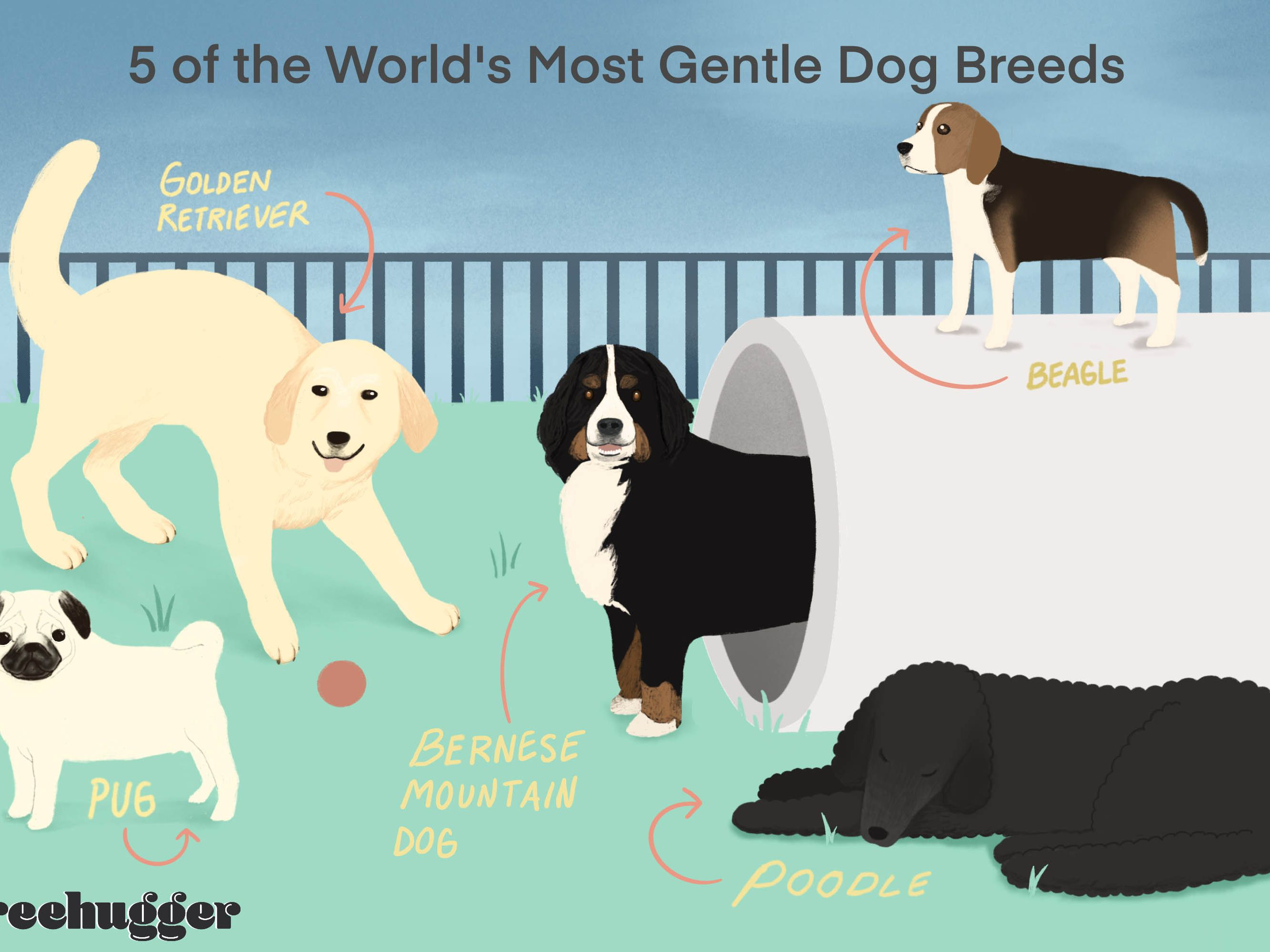 13 Of The World S Most Gentle Dog Breeds