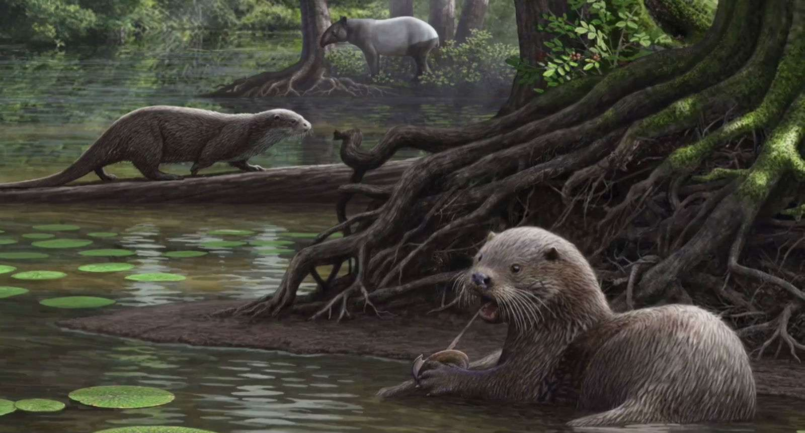 Giant otters on the water