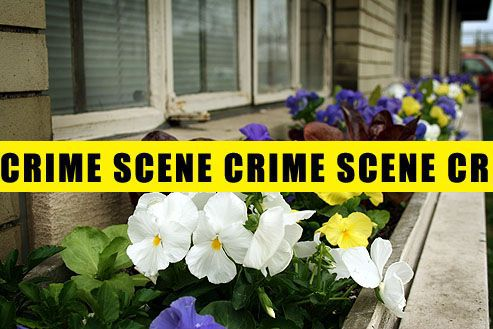 Benefits of plants on reducing crime