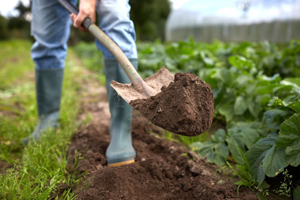 Think before you dig in the garden. Do you really need to till the soil, or are the beds good enough as they are?