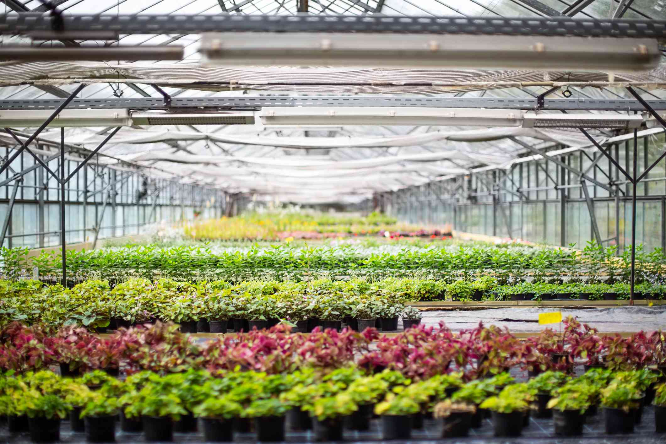 Large, modern greenhouse full of various plants