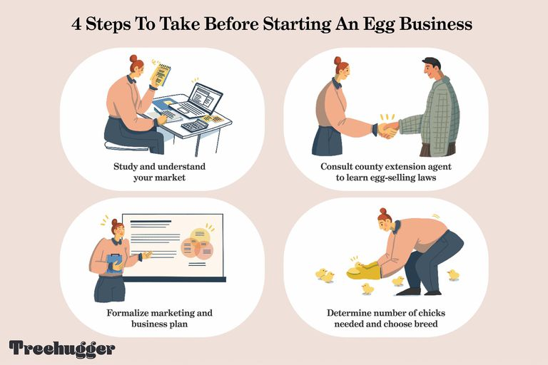 How to start an egg business / 4 steps