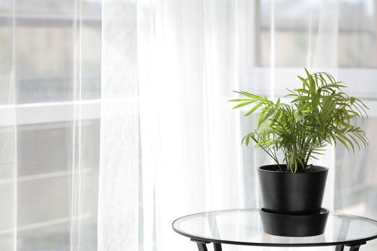 Houseplant on a table in home interior against a balcony