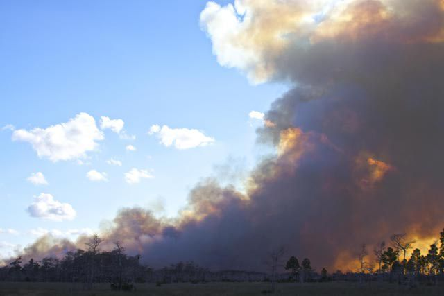 Forest fire in Big Cypress National Preserve