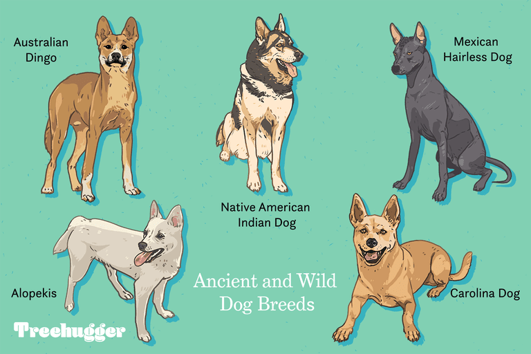 ancient and wild dog breeds illustration