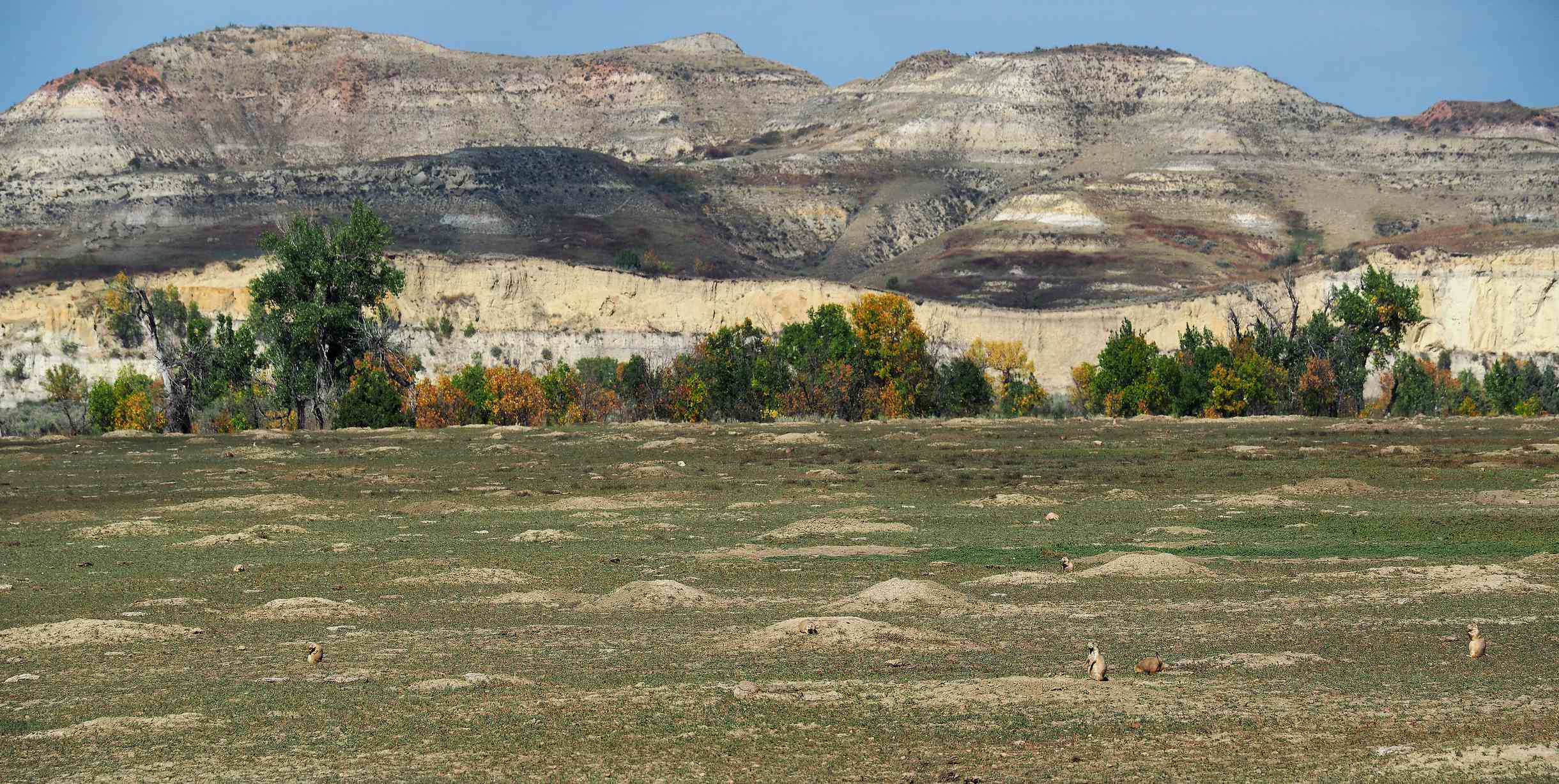 Panoramic View Of Prairie Dog Town Along The Loop Road, Theodore Roosevelt National Park
