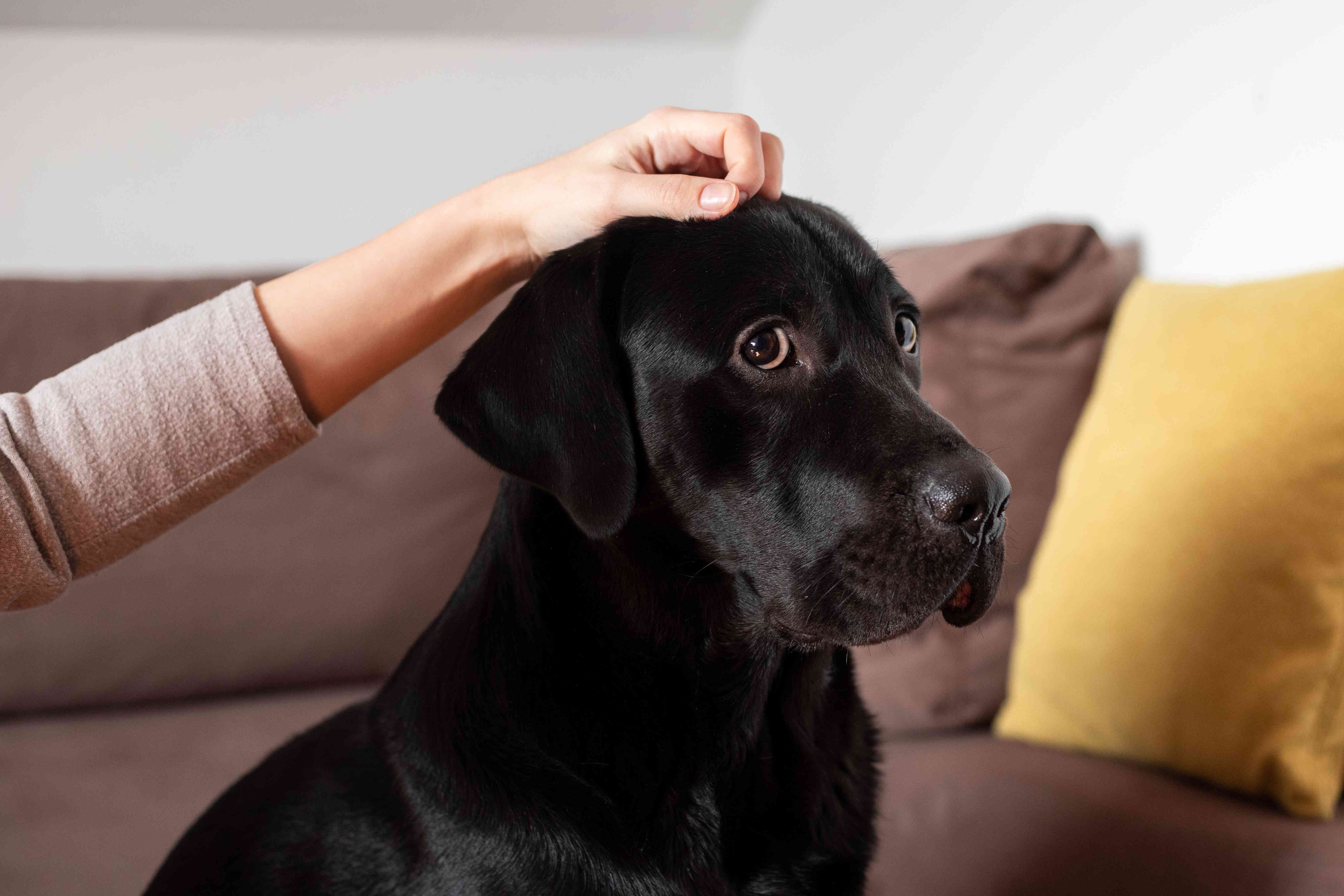 dog looks side eye at camera while human teases them with hand on their head