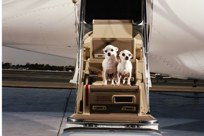 dogs on private jet