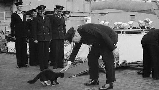 Gatos en el mar: 7 famosos felinos marineros