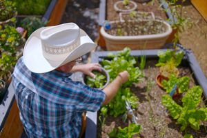 man in cowboy hat tends to his raised garden bed, full of lettuce growing
