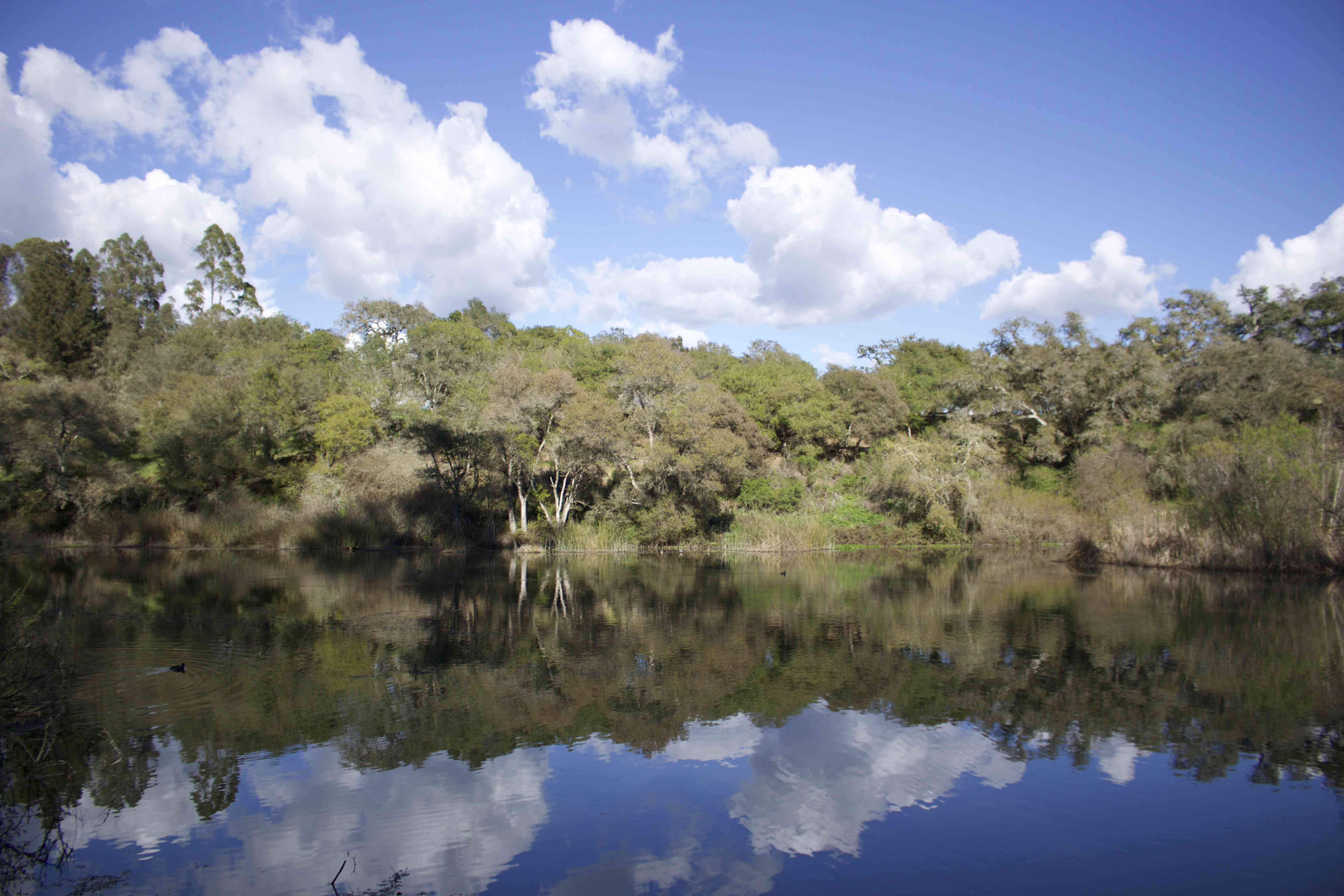Vegetation-covered bank of Pinto Lake on a blue-sky day