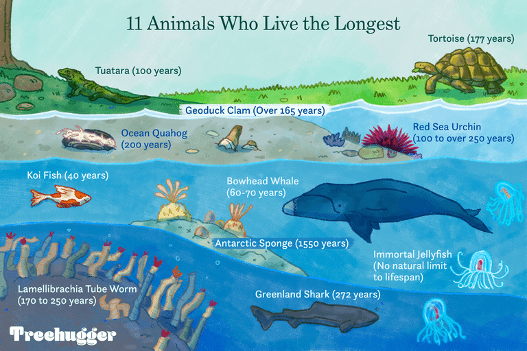 11 animals that live the longest