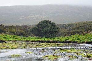 loneliest tree in New Zealand