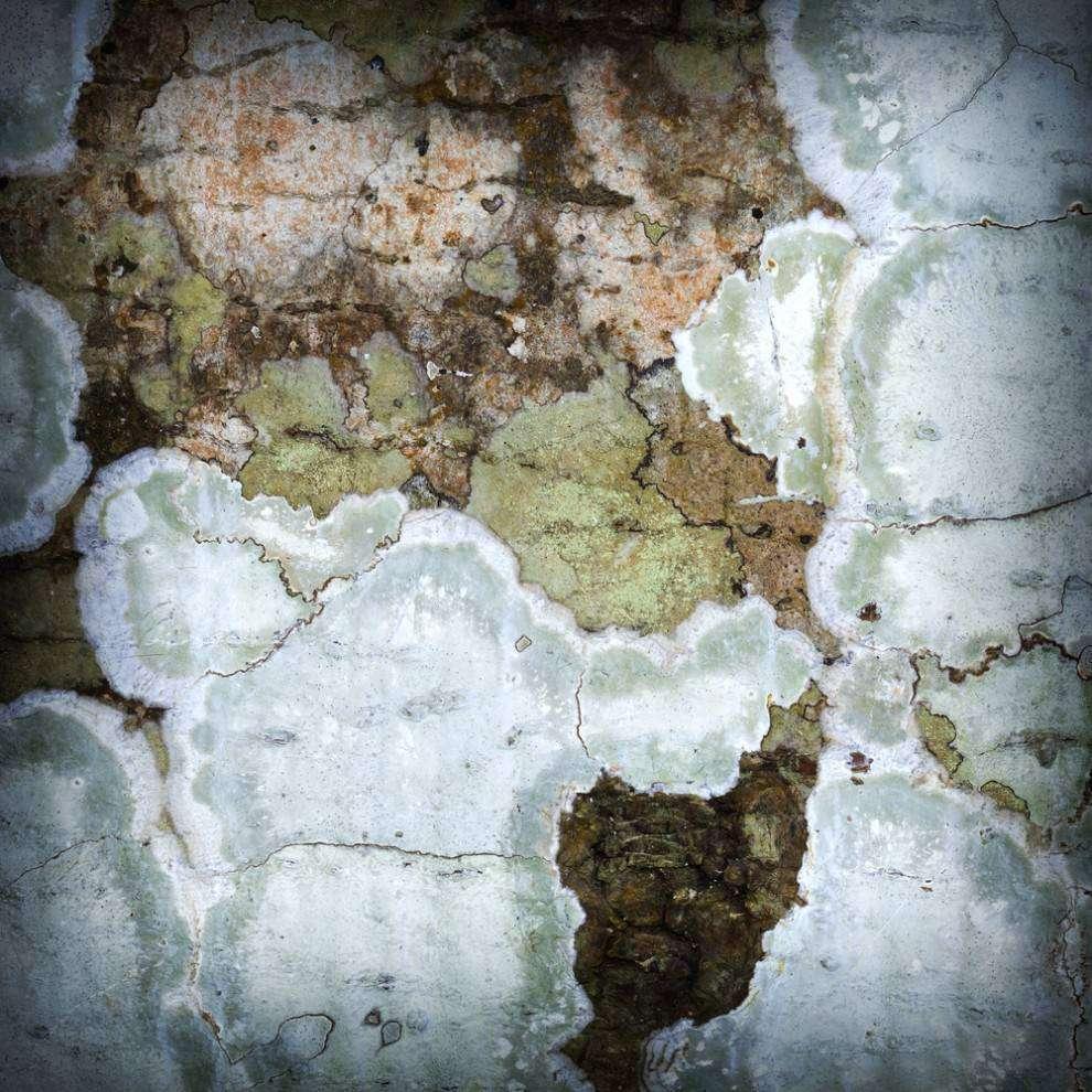 Crusty lichens